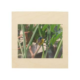 Imagen tropical de la pared del pájaro el dormir cuadro de madera