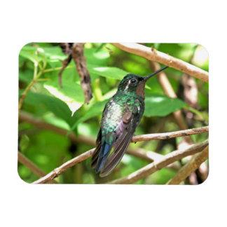 Imagen tropical del colibrí imán flexible