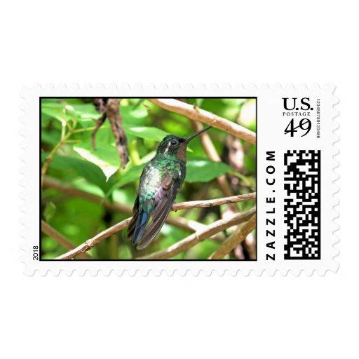 Imagen tropical del colibrí sellos