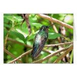 Imagen tropical del colibrí tarjeta de felicitación