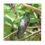 Imagen tropical del colibrí teja