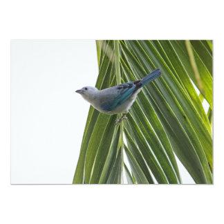 """Imagen tropical del pájaro en la palmera invitación 5"""" x 7"""""""