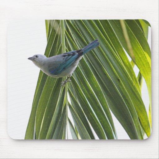 Imagen tropical del pájaro en la palmera alfombrilla de ratón