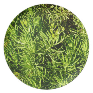 imagen verde suculenta total del follaje platos