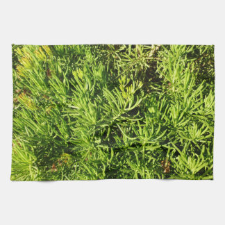 imagen verde suculenta total del follaje toalla