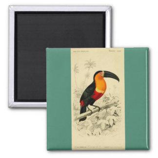 Imagen vibrante 1849 de un Toucan Imán Cuadrado