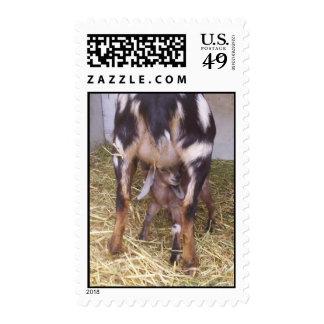 Imágenes 041 de la granja franqueo