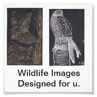 Imágenes de la fauna fotografías