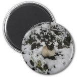 Imágenes de la nieve, gato de la nieve iman