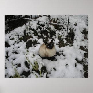 Imágenes de la nieve, gato de la nieve posters