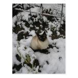 Imágenes de la nieve, gato de la nieve postal