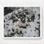 Imágenes de la nieve, gato de la nieve tapetes de ratones