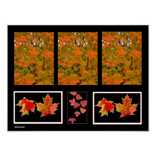 imágenes de las hojas de otoño en lona póster