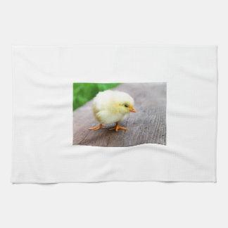Imágenes de los polluelos toalla