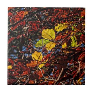 Imágenes del otoño teja cerámica