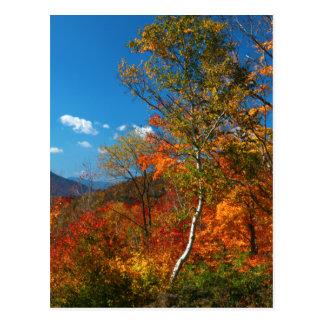 Imágenes del otoño tarjetas postales