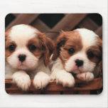 Imágenes del perrito tapete de ratones