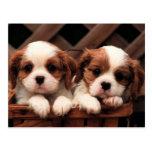 Imágenes del perrito tarjeta postal