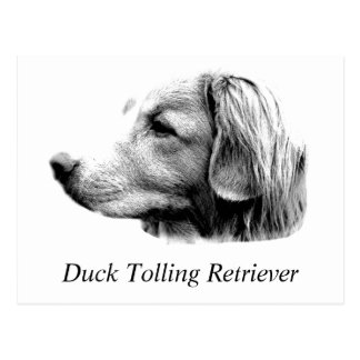 Imágenes tocantes del grabado del perro del perro postal