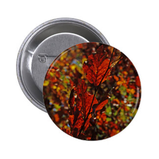 Images of Autumn Pinback Button