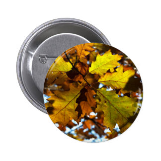 Images of Autumn Badges