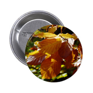 Images of Autumn Pins