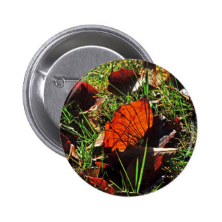 Images of Autumn Button