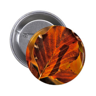 Images of Autumn Pinback Buttons