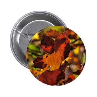Images of Autumn Badge
