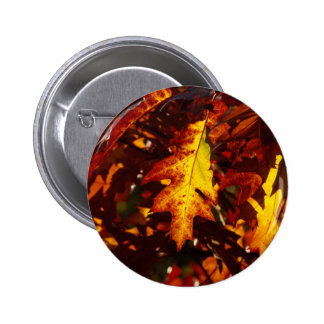 Images of Autumn Buttons