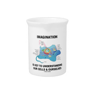 Imagination Is Key To Understanding Our Cells Beverage Pitcher