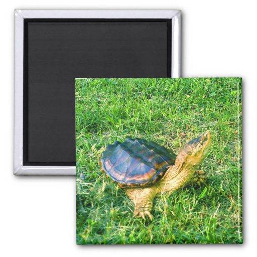 Imán #1 de la tortuga de rotura