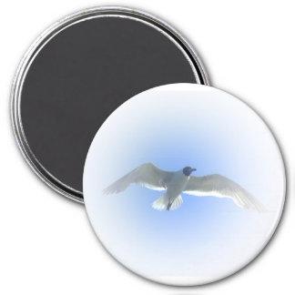 Imán 2 de la gaviota en vuelo