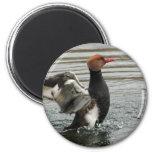 Imán - alas del aleteo del pato de mar