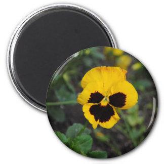 Imán amarillo de la flor del pensamiento