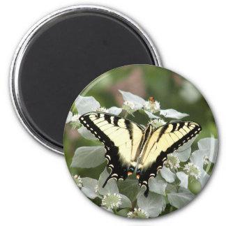 Imán amarillo de la mariposa del swallowtail