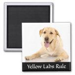 """Imán amarillo de """"Labrador Retreiver"""" de la regla"""