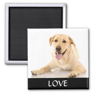 Imán amarillo de Labrador Retreiver del amor