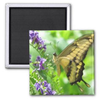 Imán amarillo del cuadrado de la mariposa de Swall
