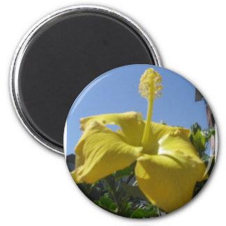 Imán amarillo del hibisco