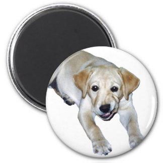 Imán amarillo del perrito de Labrador