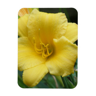 Imán amarillo del premio del Daylily