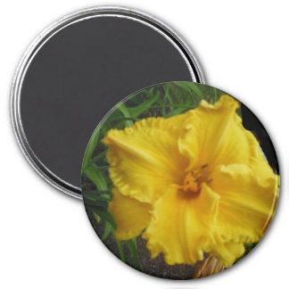 Imán amarillo magnífico del lirio
