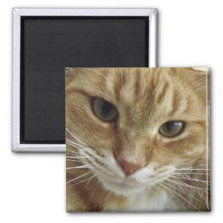 Imán anaranjado del gato de Tabby