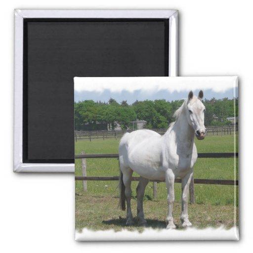 Imán árabe del cuadrado del caballo