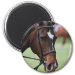 Imán árabe lindo del caballo