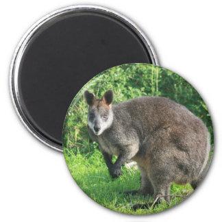Imán australiano del canguro