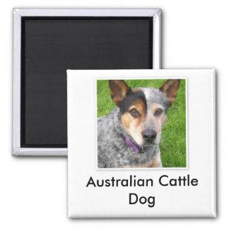 Imán australiano del perro del ganado