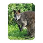 Imán australiano del premio del canguro