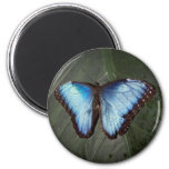 Imán azul de la mariposa de Morpho